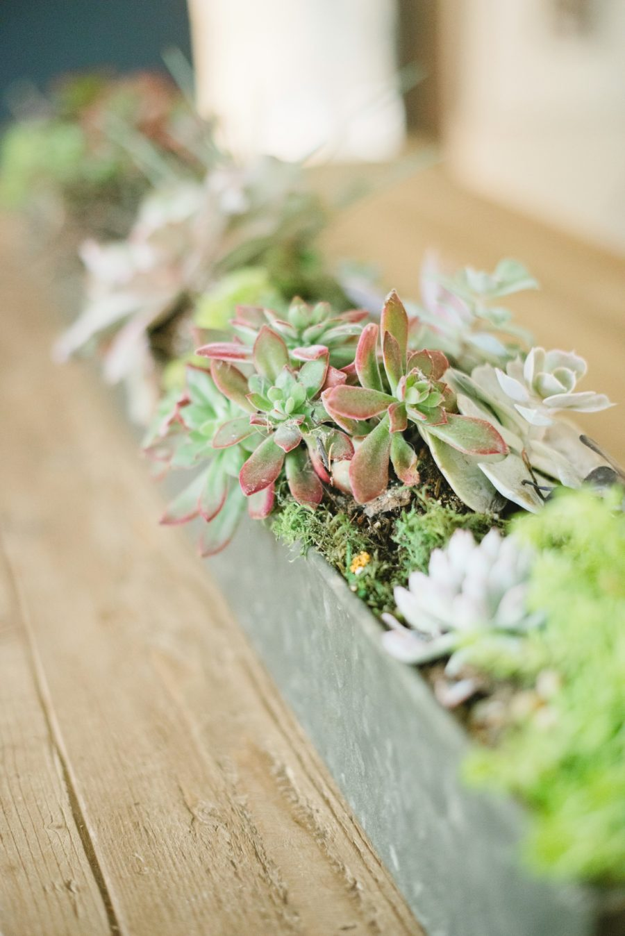 how to grow happy succulents