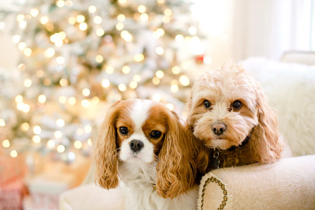 Holiday Home Tour - dogs