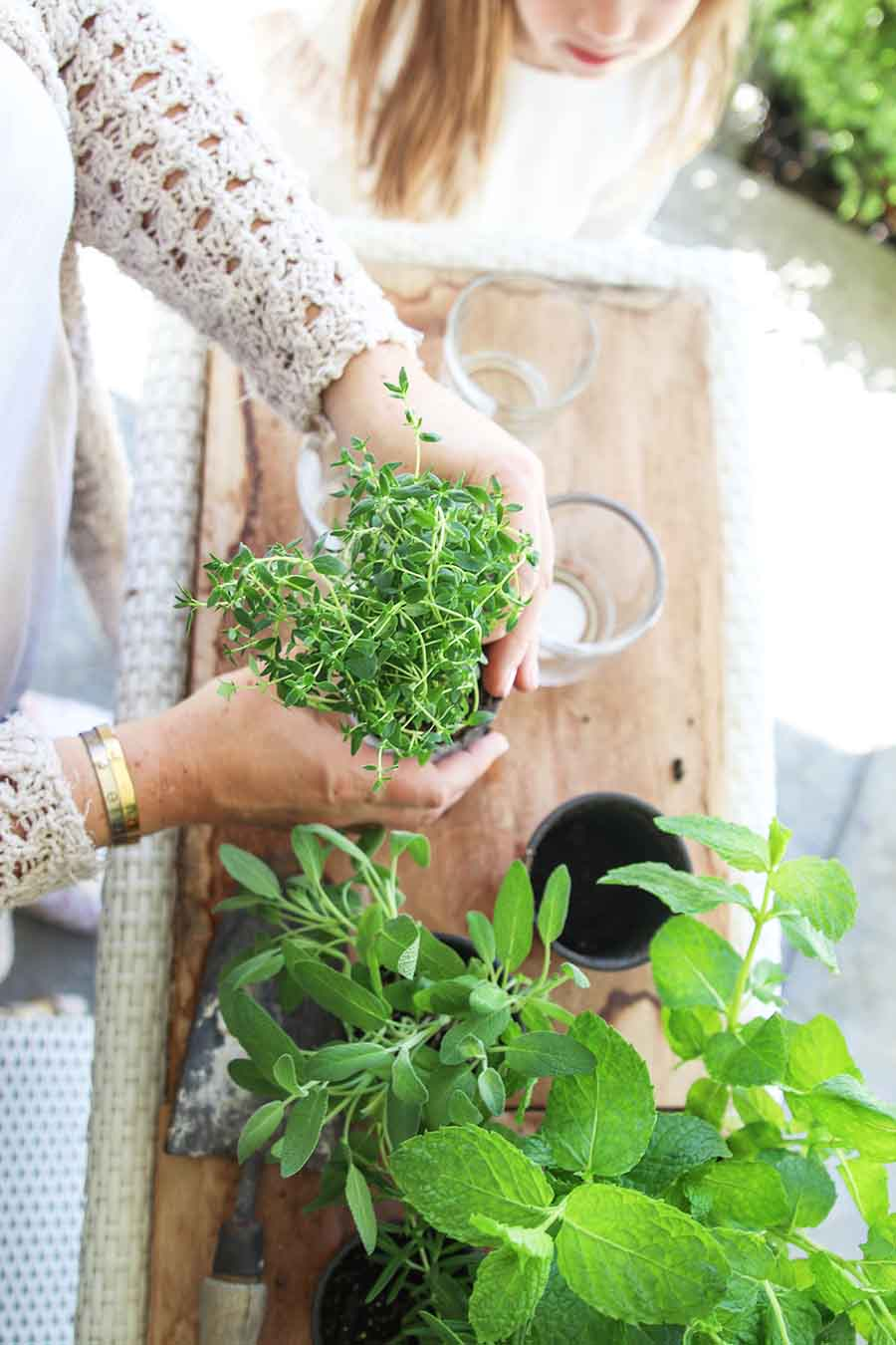 Planting an Indoor Herb Garden using chic candle jars as pots. #DIY #Repurpose #HerbGarden #Fashionablehome
