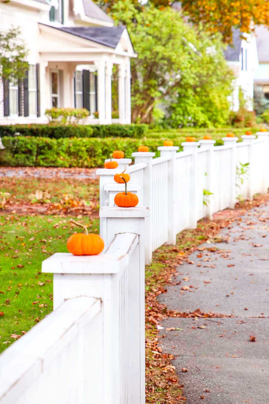 pumpkins on fence