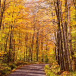 Vermont leaves