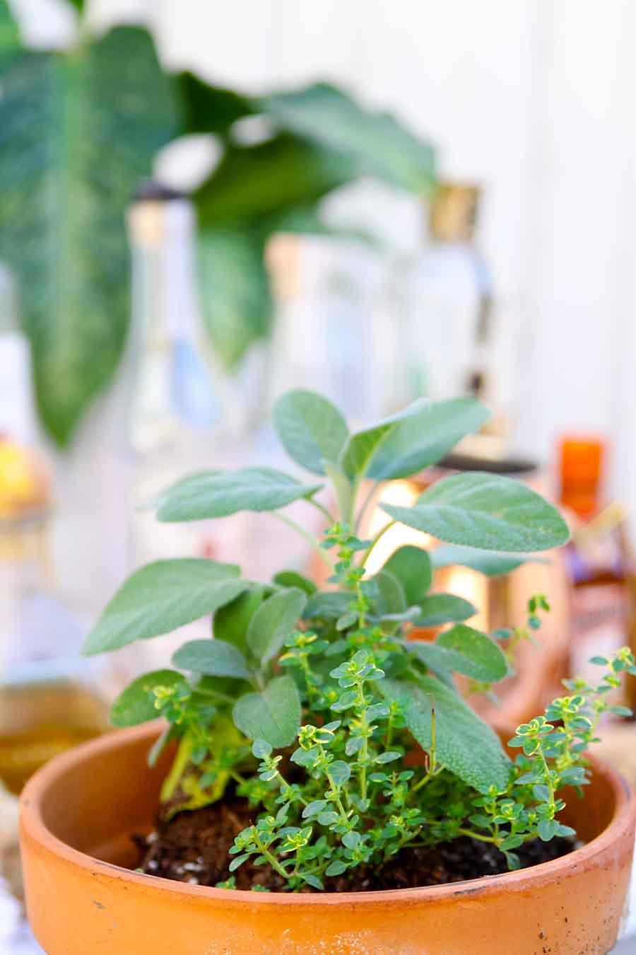 outdoor bar with herb garden