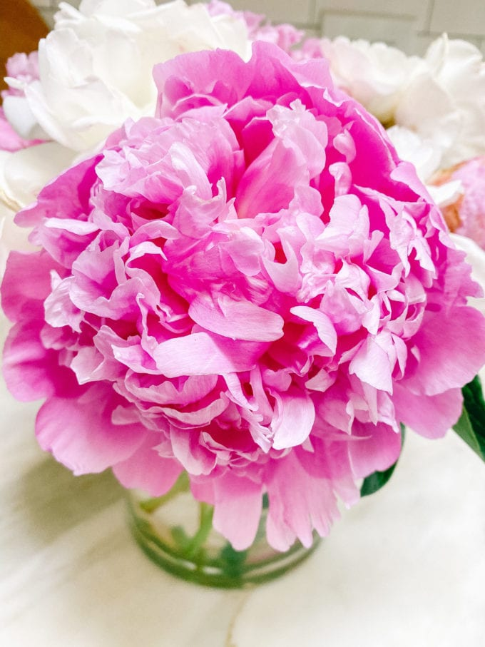 how to force peonies open