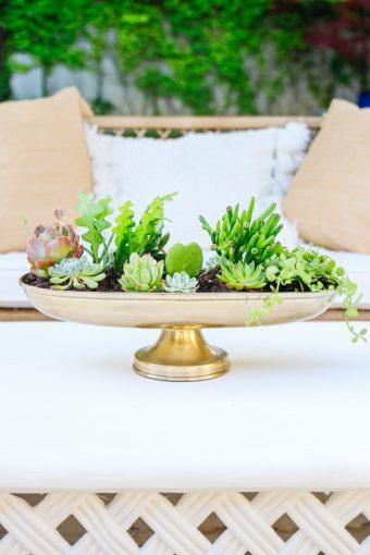 doy succulent planter
