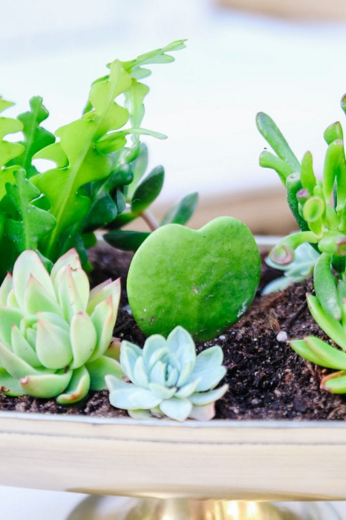succulent planter tutorial