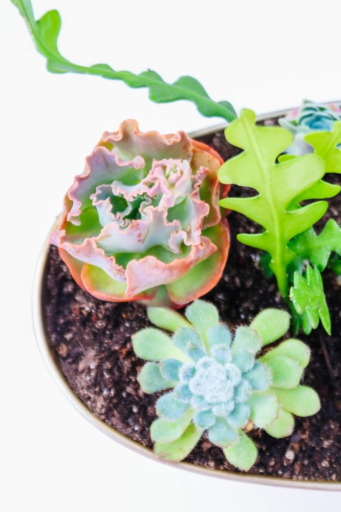 succulent planter DIY