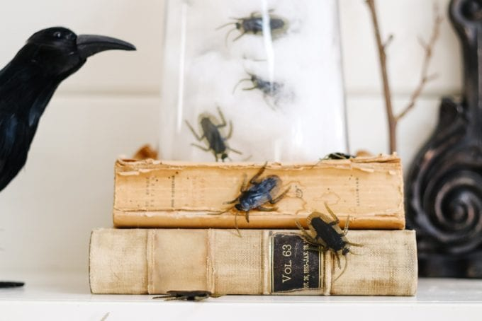 insects in glass cloche