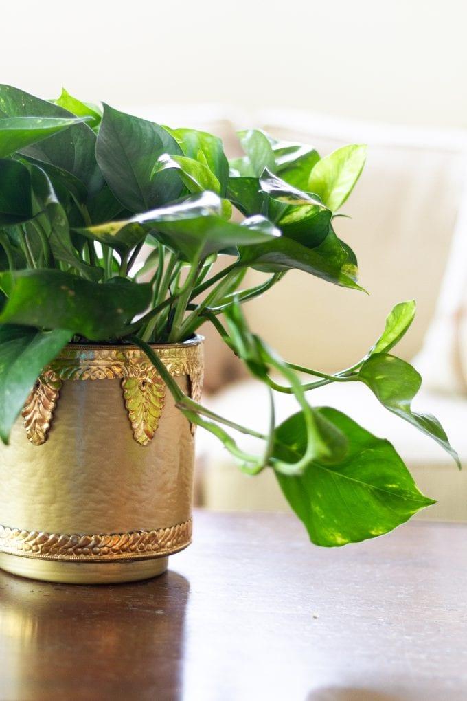 make a pot out of a vase